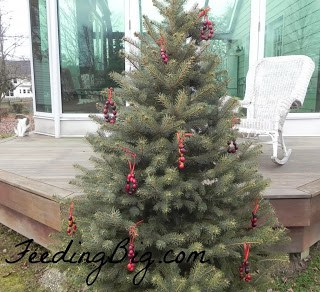 http://feedingbig.com/2012/12/cranberry-wreaths-for-birds.html