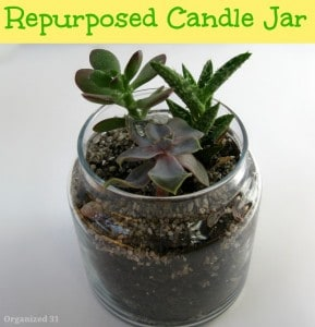 glass jar with plant on white table