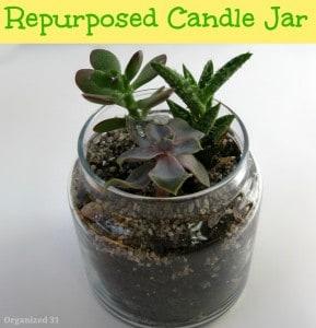 glass jar with plant