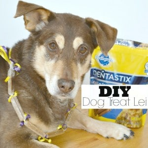 DIY Dog Treat Lei - Making candy leis is a tradition for graduation, so why not make a dog teat lei for obedience school graduation. #ShareFunshine #Ad