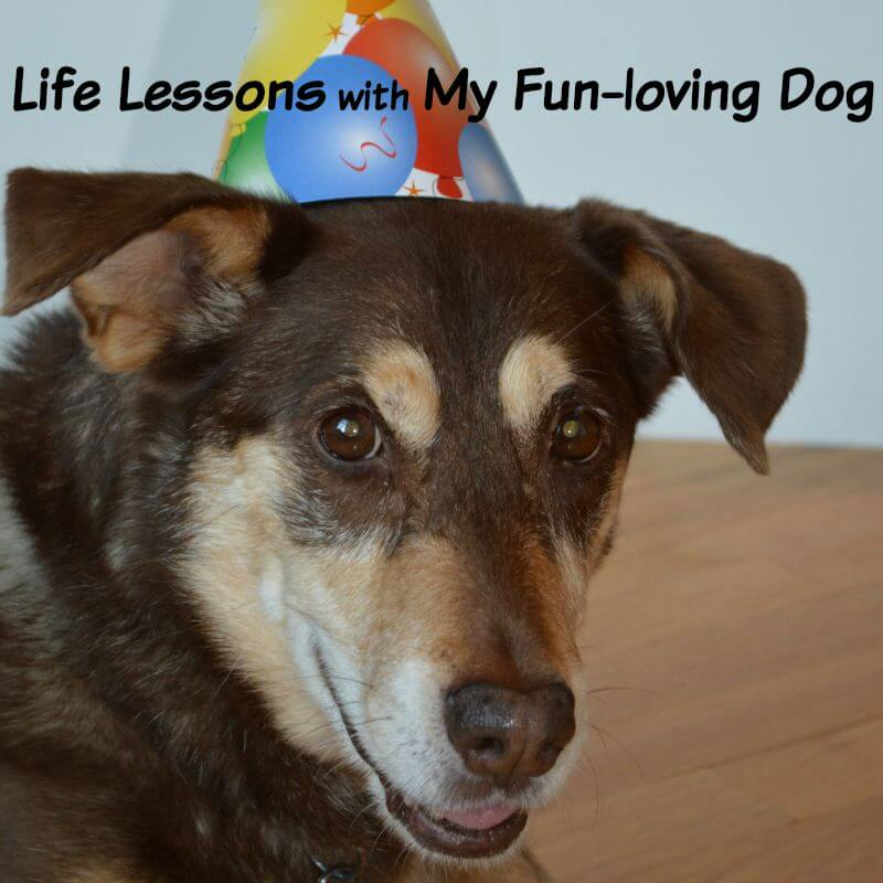 dog wearing birthday hat looking into camera
