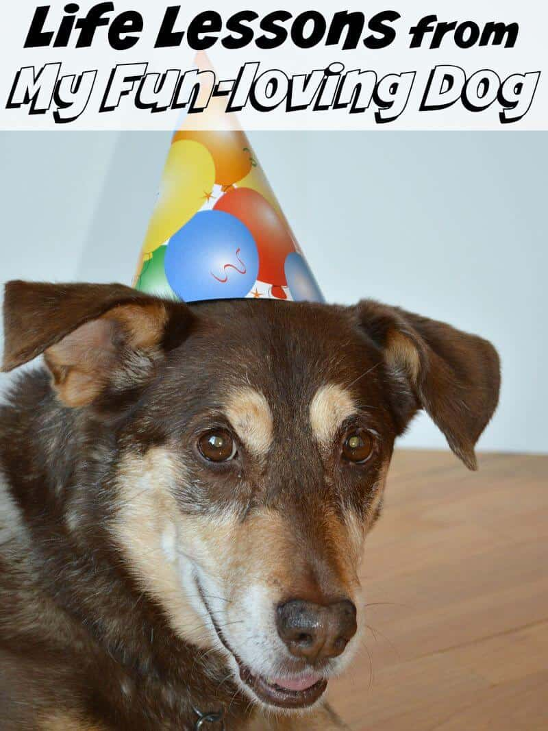 Important life lessons with my fun-loving dog. #BrightMind [Ad]