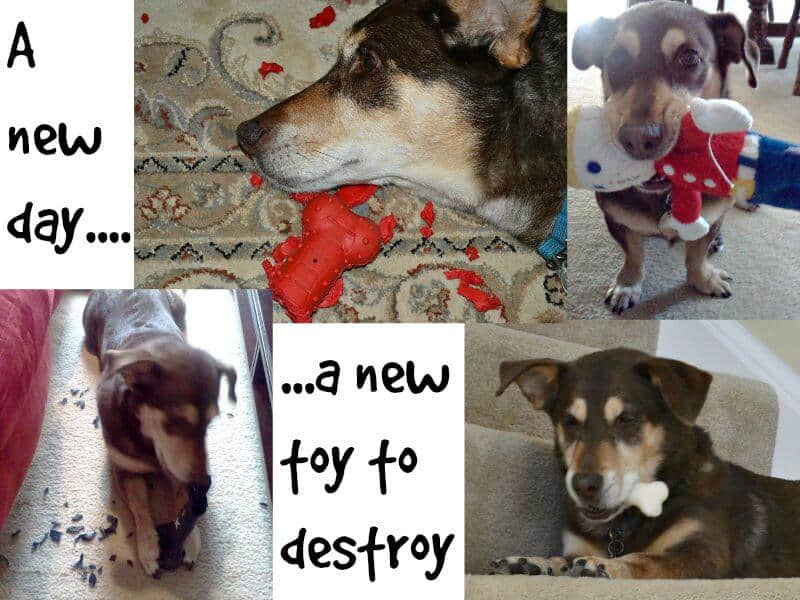collage of dog with toys