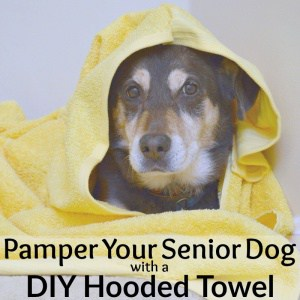 brown and tan dog in yellow hooded towel