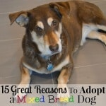 15 Great Reasons To Adopt a Dog
