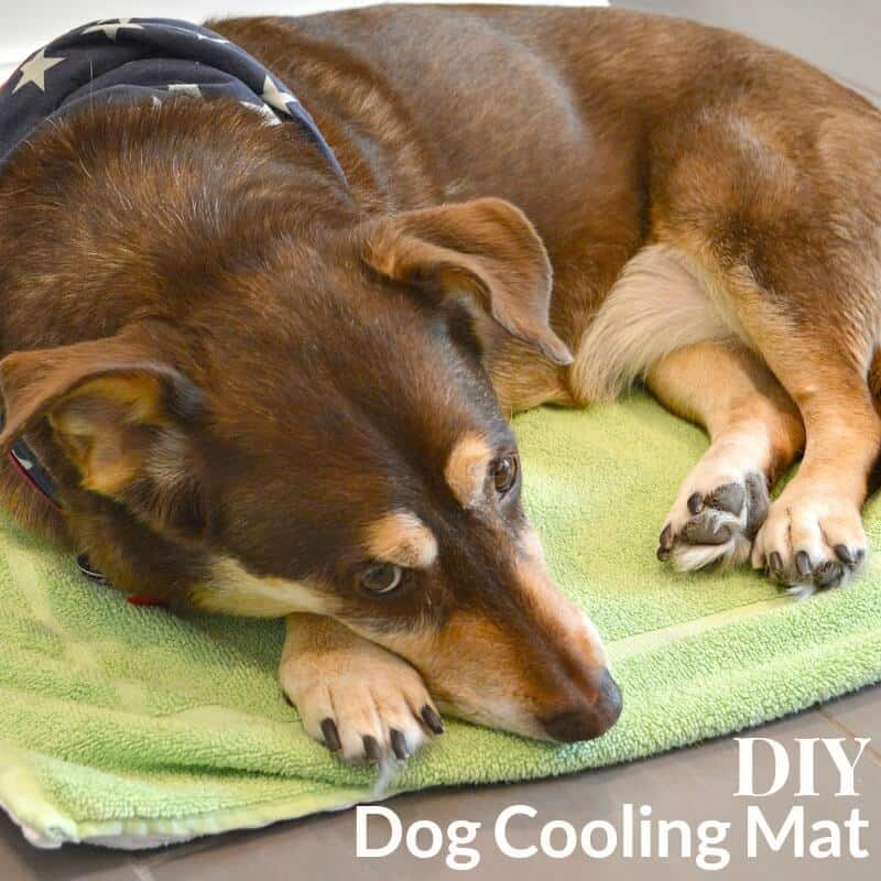 Make this DIY Dog Cooling Mat in 20 minutes to pamper your dog on the hot dog days of summer. #PawstoSavor [ad]