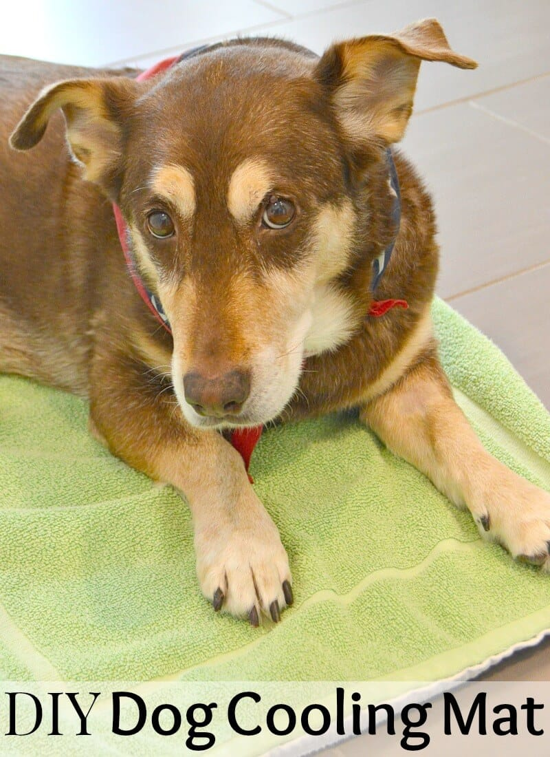 brown and tan dog looking at camera and laying on green cooling mat