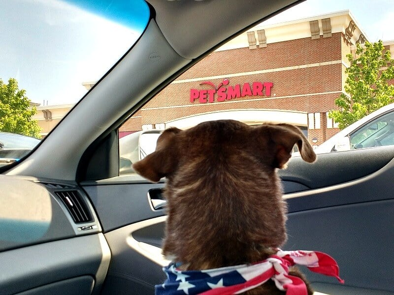 dog looking out of car window at pet store