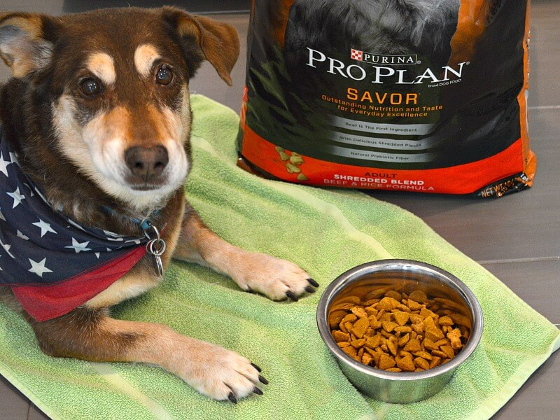 brown and tan dog with bandanna sitting in front of bowl of food on green mat