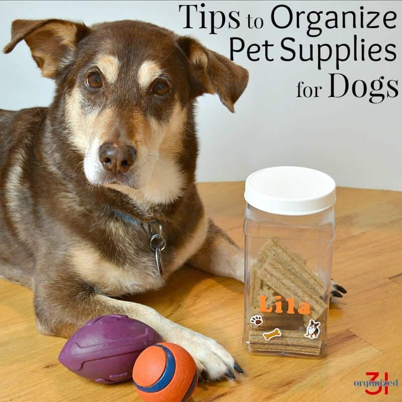 dog looking at cameral with toys and jar of treats
