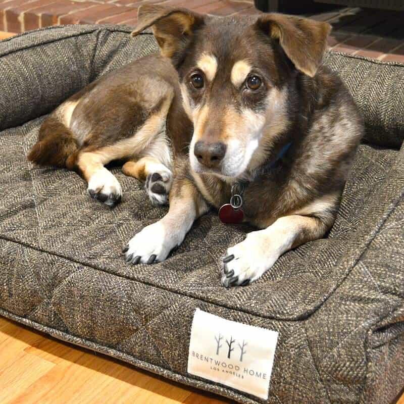 tan and brown dog looking at camera and laying in brown dog mat