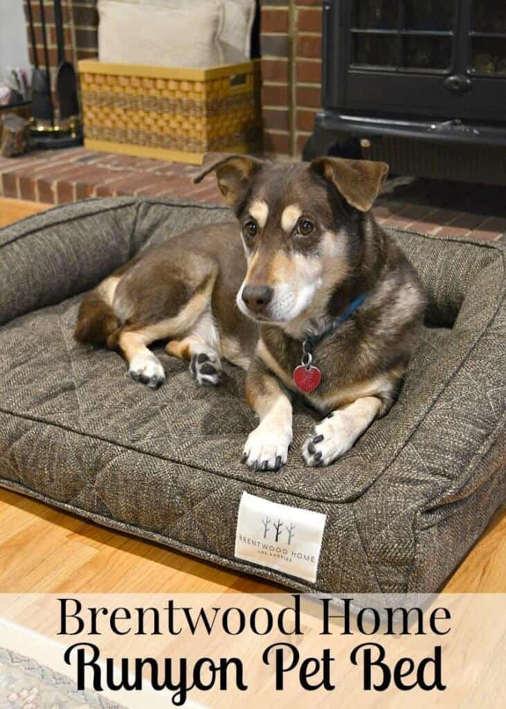 dog looking at the camera and laying in brown bed with Brentwood Home label