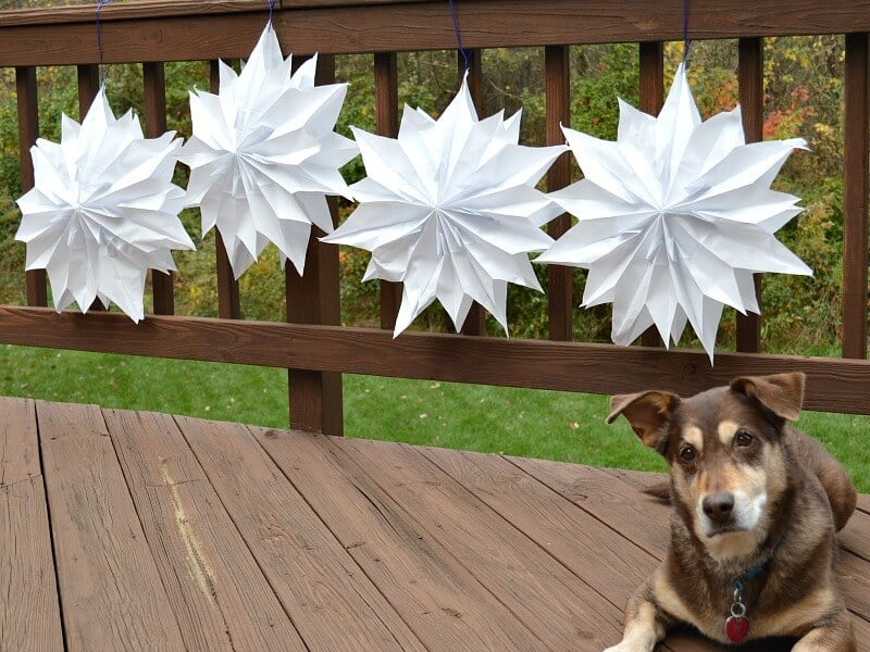 dog looking at camera on deck and 4 white paper star decorations tied to deck railing