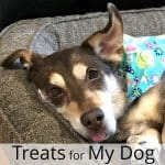 Treats for My Dog