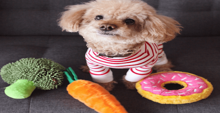 dog in striped shirt with dog toys scattered around