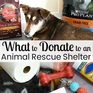 dog surrounded by items to donate to a dog shelter with text overlay