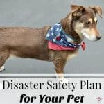 Disaster Safety Plan Tips for Pets
