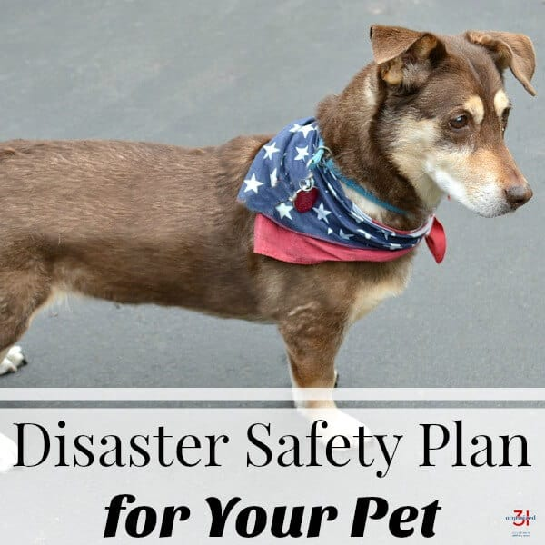 brown dog with blue bandanna with white stars with text overlay reading Disaster Safety Plan for Your Pet