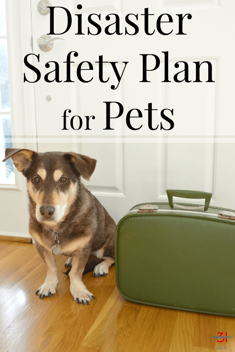 brown and tan dog sitting next to small green suitcase next to front door with title text overlay reading Disaster Safety Plan for Pets