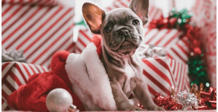 puppy in Christmas stocking in front of gifts