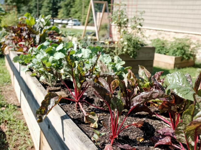 raised garden bed filled with plants