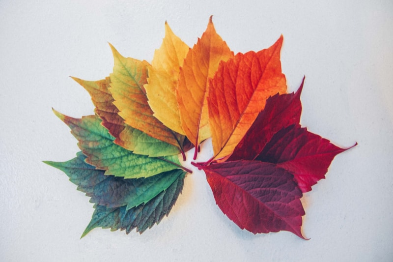 different colored leaves fanned out